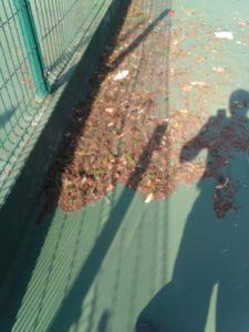 tenislife-sapobla-85